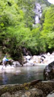 Stonefly, May, Slovenia fly fishing