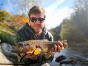 Nice October Brown trout, Slovenia