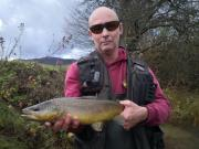 Brown trout November