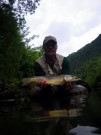 Marble trout on dry fly