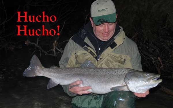 hucho hucho